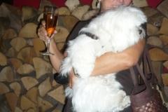malteserhund_auf_dem_arm_der_besitzerin