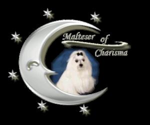 Malteser Rüden